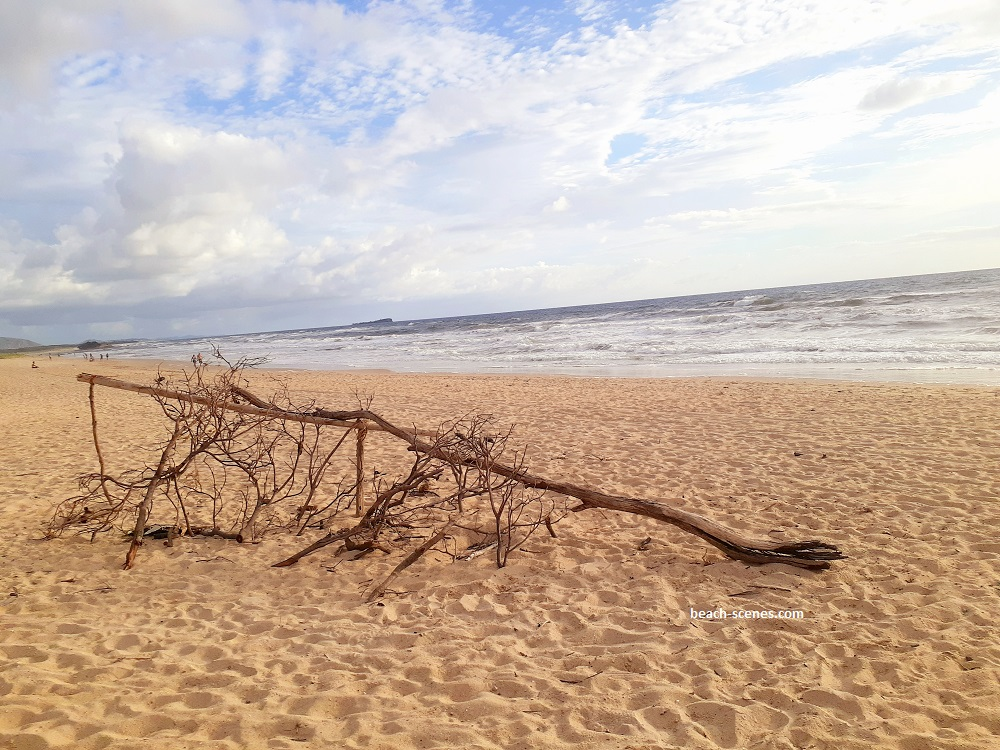 My Driftwood on Maroochydore Beach photo is available to buy as wallpaper for your iPhone, iPad, laptop or other electronic device.
