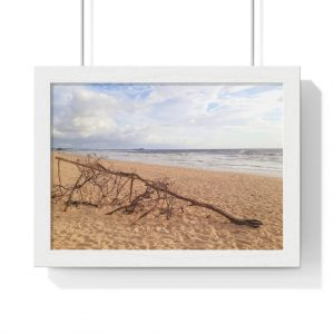 You can buy this Driftwood at the Beach Framed Poster from Beach Scenes online store.