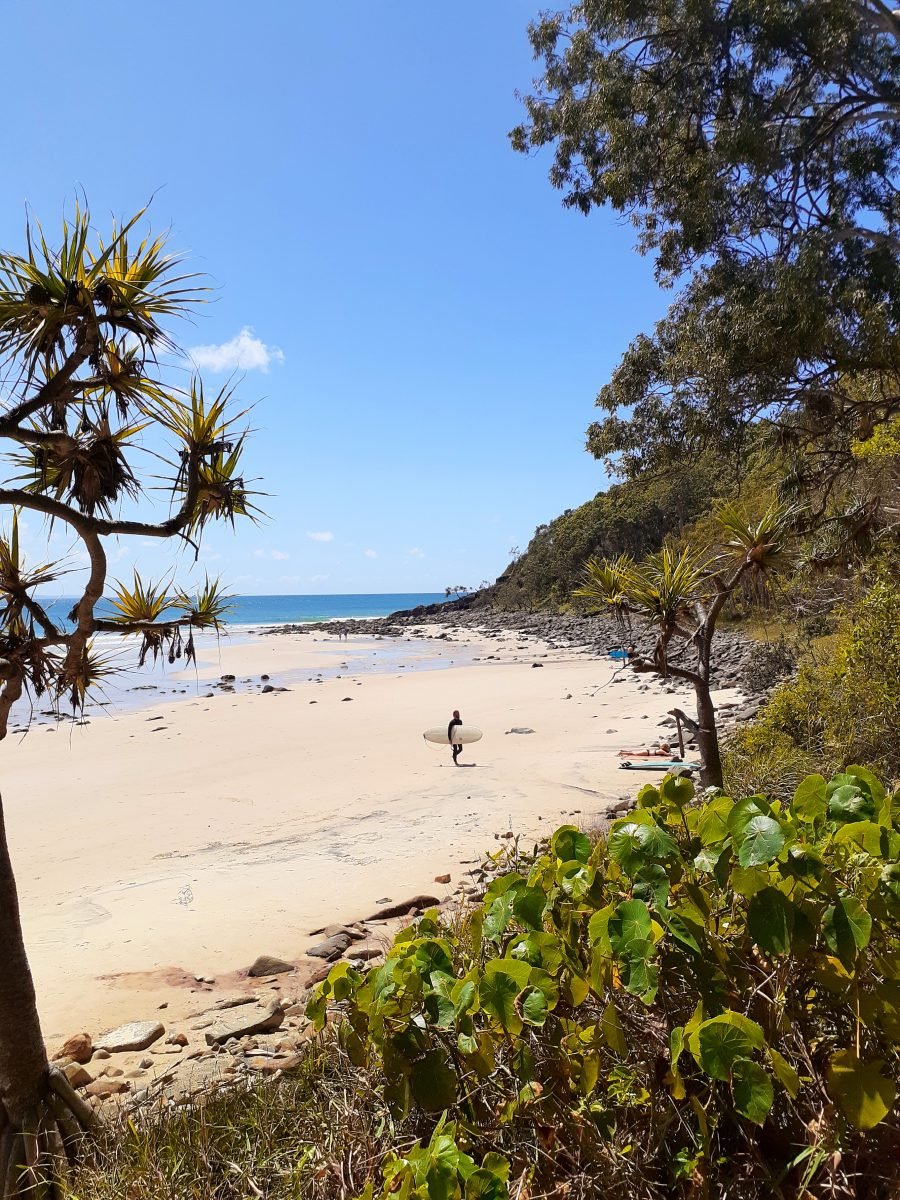 Little Cove Beach in Noosa is one of the best Sunshine Coast Beaches